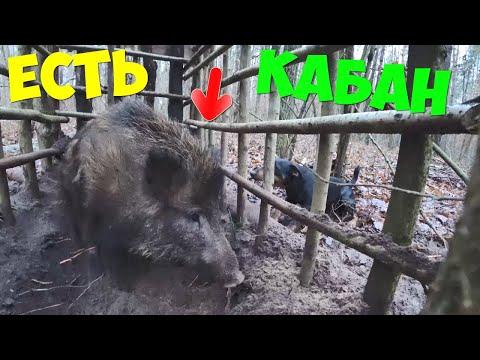 Выживание [9-Часть] Поймали дикого кабана в ловушку.Жареная печень и ребрышки в казане.