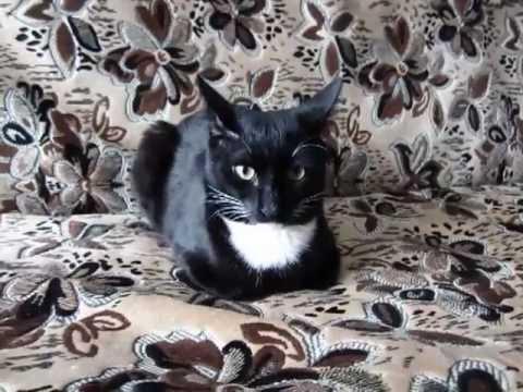 Доброе слово и кошке приятно - Home