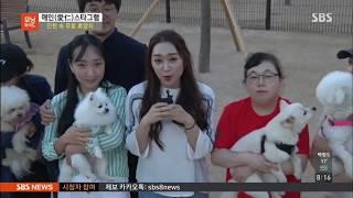 인천 속 무료 휴양지_계양산 장미원 반려견쉼터 (sbs모닝와이드 방송)썸네일