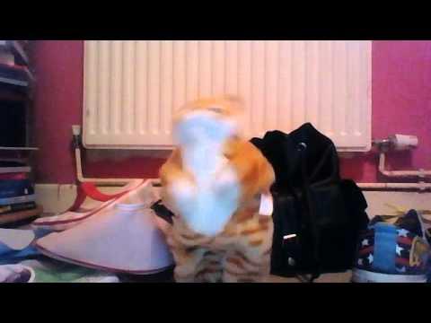 dancing cool cat robot cat dances to hot n#gga by bobby smurda
