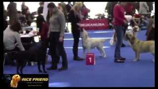 Mvp Duocacib Brno 7.2. 2015 Labrador Retriever