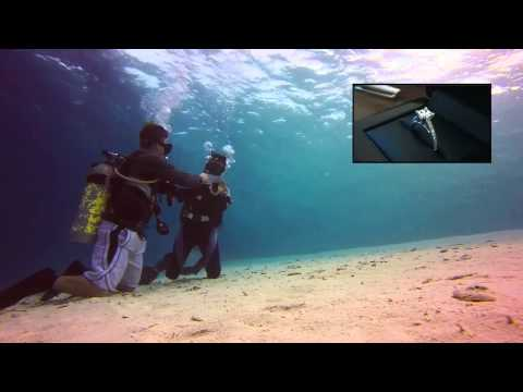 Mel & Freddy's Singapore to Malaysia Underwater Diving Proposal