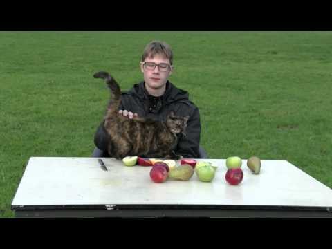 G Goran #21 'Appels en Peren'