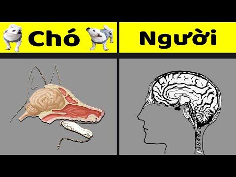 Tại sao Người thông minh hơn chó?   Lược sử loài người Tập 2