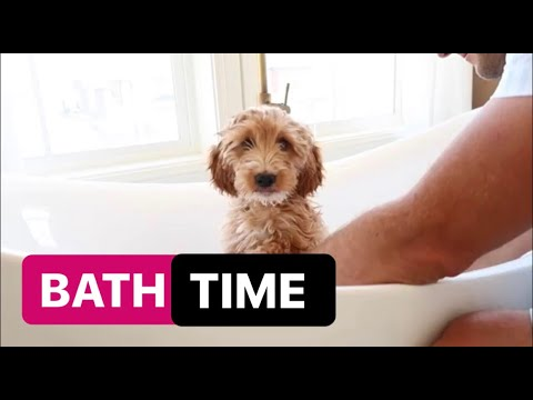Puppy's FIRST Bath | Dogs take over the Vlog | The LeRoys