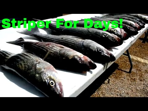 STRIPER Fishing Lake Whitney! (BEST DAM GUIDE SERVICE!)