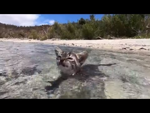 Fearless kitten loves swimming in the ocean
