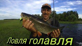 Ловля Голавля Рыбалка на спиннинг Рыбалка 2021