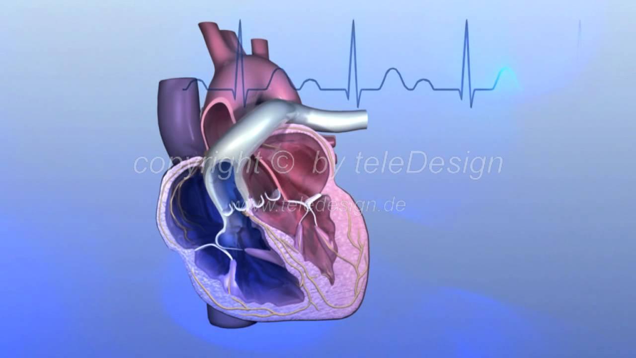 HGL 107 Reizleitung EKG - PAL 16:9 / HGL 107 Heart\'s Electrical ...