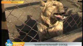 Жители иркутского дома вынуждены жить со сворой собак