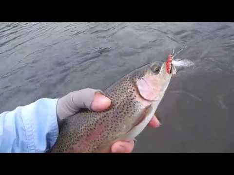 Fly Fishing Madison River , Yellowstone 2014