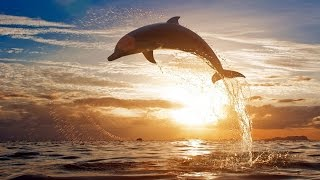 WORLD'S MOST ACROBATIC DOLPHIN | Dolphin Olympics 2