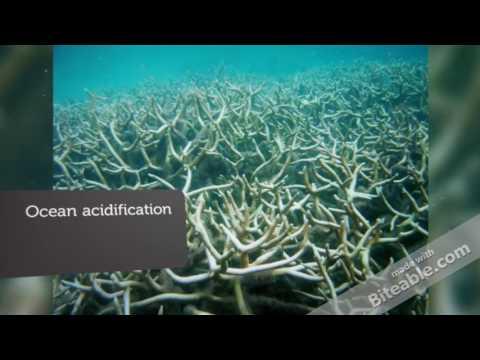 Climate Change (Bio 10)