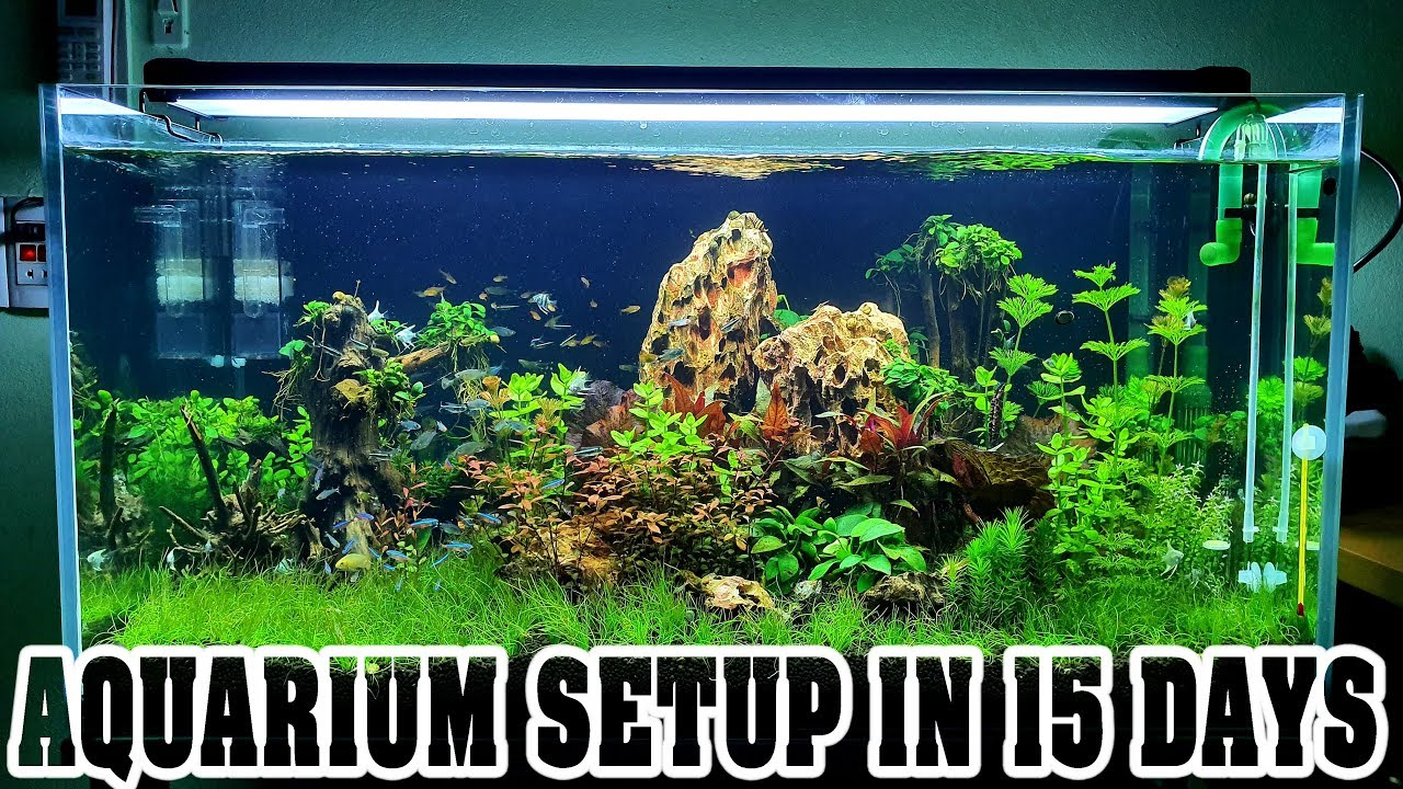Aquarium Setup In 15 Days Aquascape Live Planted Fish Tank Youtube