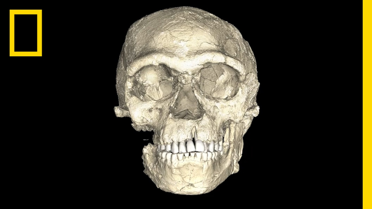 Oldest human fossil lucy