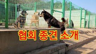 협회 종견 소개 2편