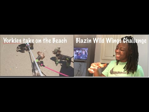 ADORABLE DOGS FIRST TIME AT PONTE VEDRA BEACH | BLAZIN BUFFALO WILD WINGS CHALLENGE