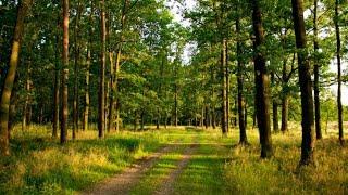 Автопутешествия. Смоленск. Проезжаем трудные дороги на автомобиле Дастер по плохим лесным дорогам.