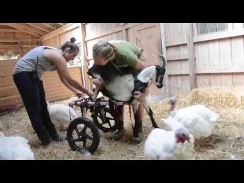 Health Care at Farm Sanctuary: Highs and Lows