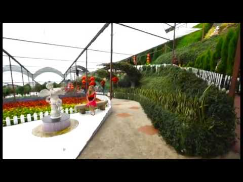 Tesat madang bungai (Sima tawil) thumbnail