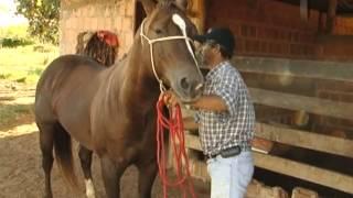 Doma de Cavalo