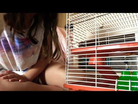 Cleaning hamster cage🐹