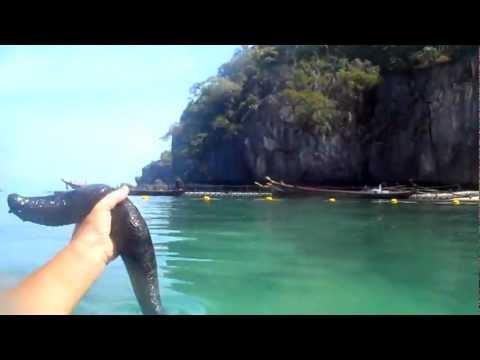 Трепанг - морской женьшень