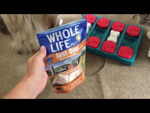 Ragdoll Cats Try and Get Whole Life Pet Chicken Treats from Nina Ottosson Dog Brick Puzzle Toy!