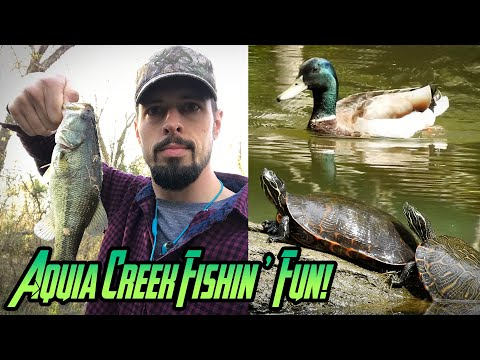 Aquia Creek Spring Fishing Progress With Ducks And Turtles In Aquia Harbour | Stafford, Virginia