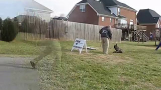 "Pak Masters Dog Training ""fun Puppy Obedience"""