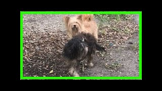 | Dog Rescue Stories2 Dogs Dumped Like Trash During Hurricane Matthew Are Rescued, Thanks To Cari...