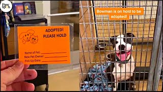 Shelter Dogs Get Adopted  Priceless Moments When Shelter Dogs Realized They Are Being Adopted