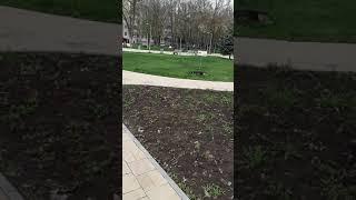 Дохлые собаки,)))