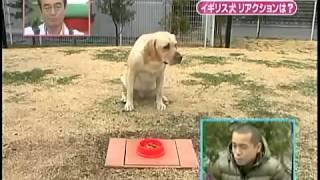 Japan TV - Dog Reaction