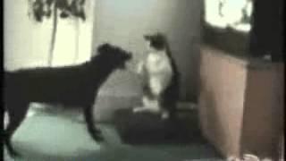 cat vs dog бой на смерть ))))