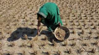 The Green Revolution: Waging A War Against Hunger