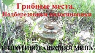 Грибные места.  Подберезовики подосиновики и противотанковая мина(в один из летних дней выбрались по грибы . были подосиновики и подберёзовики, и неожиданная опасная находка..., 2016-08-08T12:49:05.000Z)