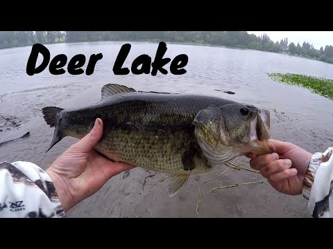 EAGLE TOOK MY FROG LURE... TWICE!! Talking About Deer Lake