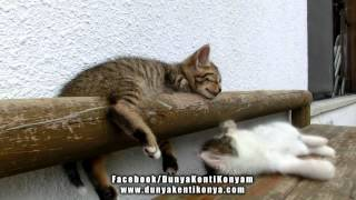 Kedilerin Keyfi Yerinde
