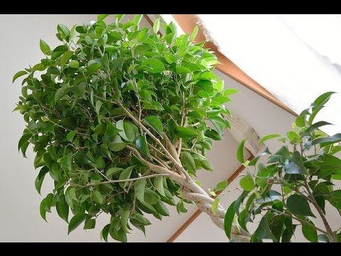 MAKE SURE YOU HAVE AT LEAST ONE OF THESE PLANTS IN YOUR HOME TO PROTECT ...