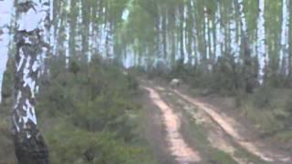 Niesamowite wilk w lesie wielkopolska 2014
