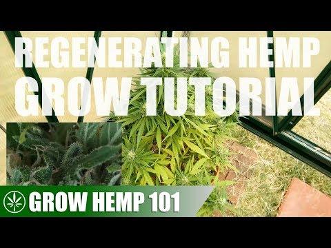 Regenerating Hemp & Timelapse Grow Tutorial