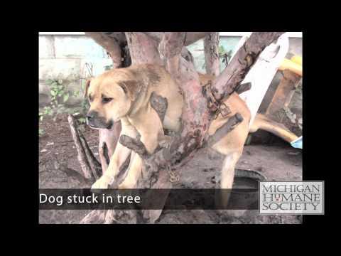 Fighting Animal Cruelty in Detroit