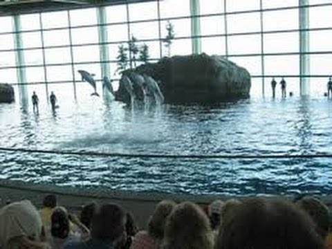 Dolphin Show at Shedd Aquarium, Chicago