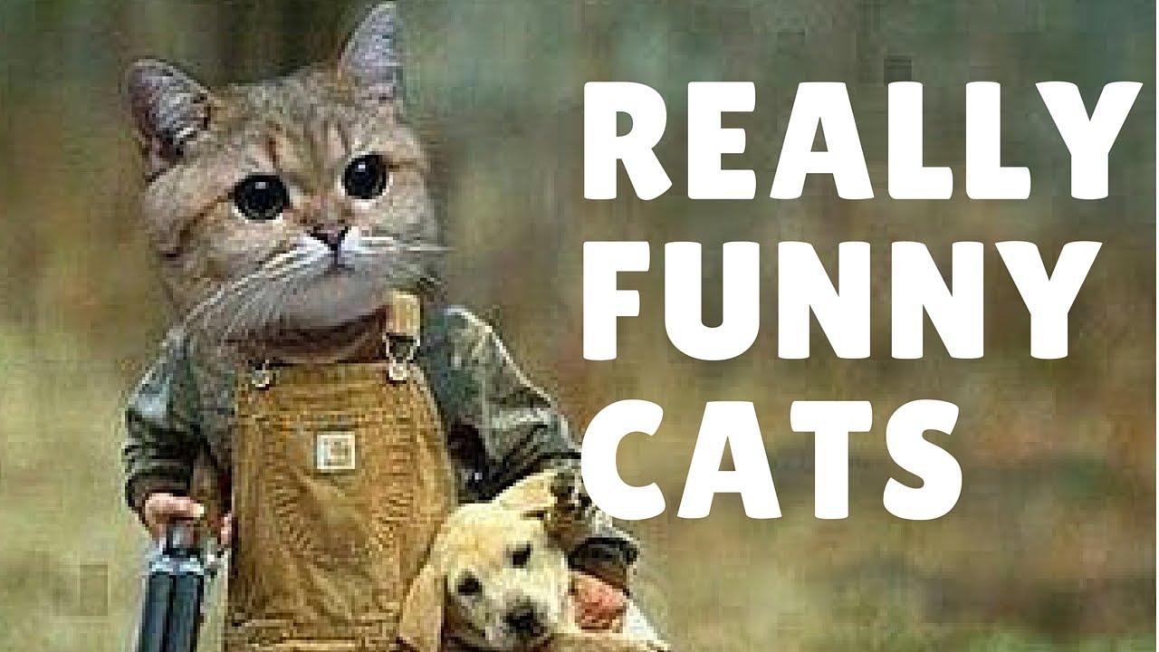 Really funny cat videos pilation 2015 by Vidsoap