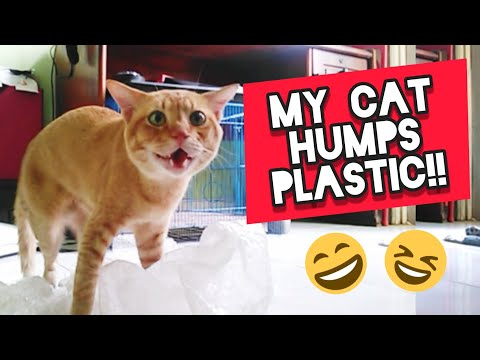 Cat Humps Plastic!! 😱 Why Does My Cat Hump Things?