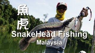 Play Fish 6, Snakehead Malaysia, 魚虎 水馬溜