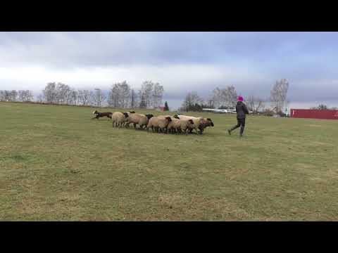 Angee Wallachian Flower - Pasení oveček