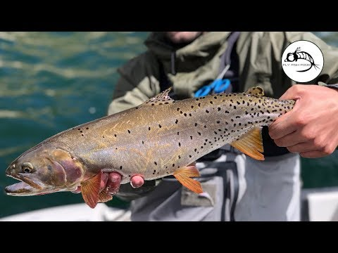 Fly Fishing Strawberry Reservoir - UTAH - Cutthroats On Streamers!