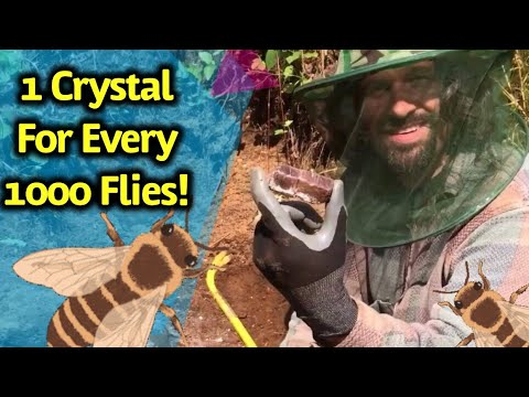 Digging Crystals & Gems In Canada & Getting Attacked By Bugs!